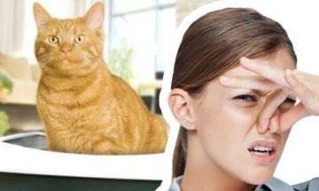 Причины запаха пота как кошачья моча